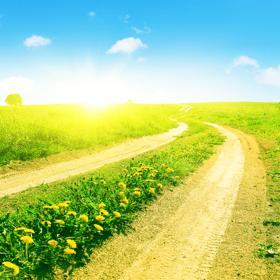 花が咲いている道